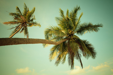 Coconut palm tree on beach with vintage toned.