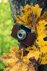 Autumn concert, retro camera on a autum background