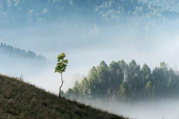 Foggy morning in Apuseni Mountains, Romania