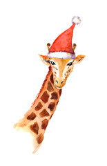 Christmas giraffe in red santa's hat. Watercolor animal