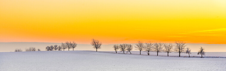 Foto op Canvas Meloen winter landscape with tree alley in sunset