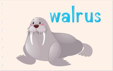 Flashcard animal with walrus
