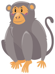 Cute monkey on white background