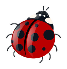Ladybug with red wings