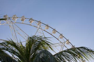 Ferris wheel and palm tree