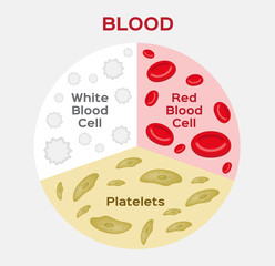 Composition of blood diagram . red and white blood cell . vector
