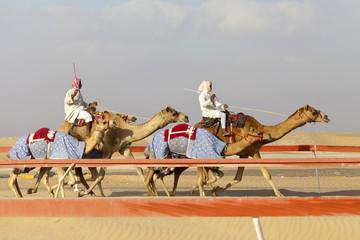 Camel race in Abu Dhabi
