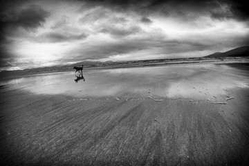 Running Free on a Beach