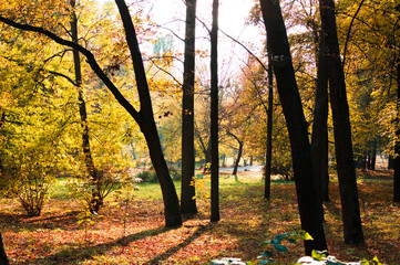 Yellow and orange trees in the park at the autumn