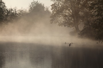 rivière dans le brouillard