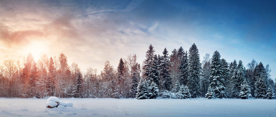Beautiful tree in winter landscape in late evening in snowfall
