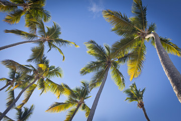 Palm trees over blue sky in Punta Cana, Dominican Republic