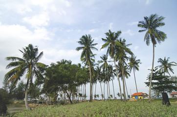 beautiful village scenery located in Terengganu, Malaysia.