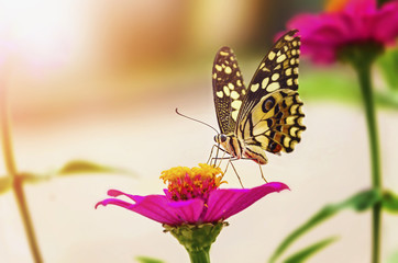 butterfly and flower with sunshine in nature