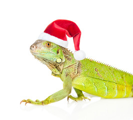 Closeup green agama  in red christmas hat. isolated on white