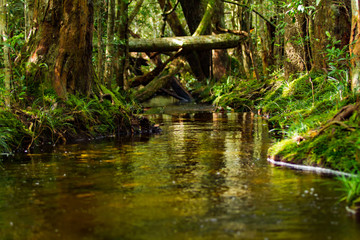 Rivers, canals and creeks flowing water in the forest.