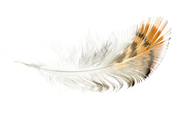 Bird light brown feather isolated on white  background