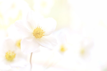 Keuken foto achterwand Natuur Pastel flower background. Floral art concept.