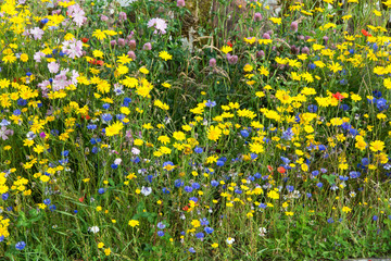 Patch of Wildflowers