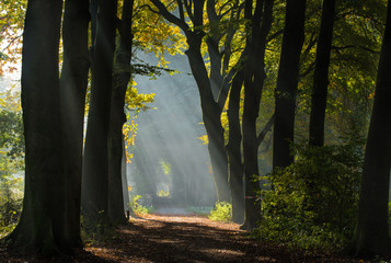 Autumn fog in the forest