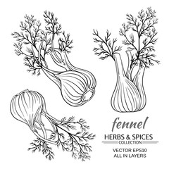 fennel vector set