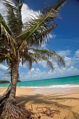 Palm tree on the sea beach.