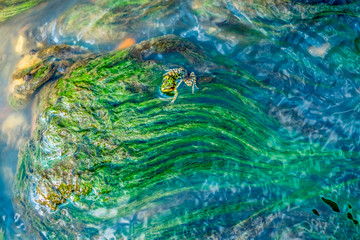 Green algae and frog under water drawn by stream. Suitable for use in projects on imagination, creativity and design