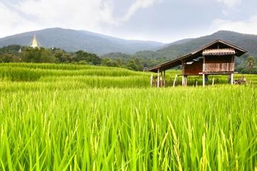 Fotobehang Rijstvelden rice terrace at chiangmai , thailand