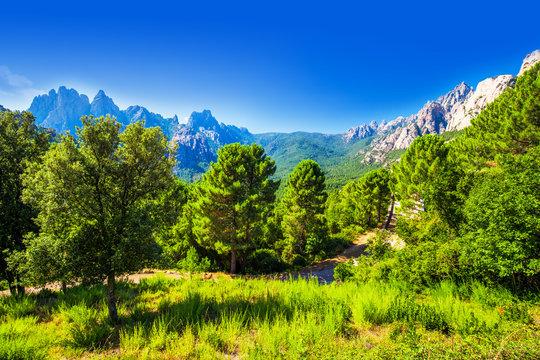 Pine trees in Col de Bavella mountains near Zonza town, Corsica