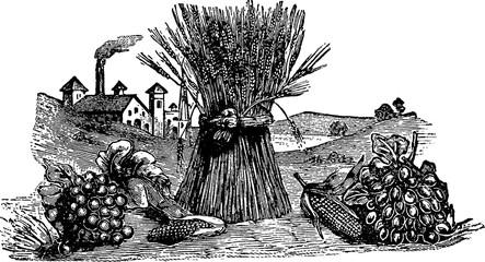 Vintage image harvest