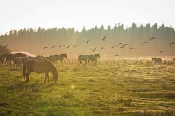 Acrylic Prints Horses Konikpaarden Oosvaardeseplassen