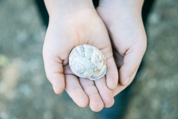 Close up of child's hands holding a snail shell.