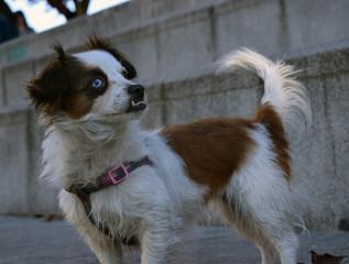 Mascotas: perros.