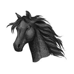 Black raven horse head portrait