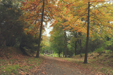 Eski Orman Yolu ve Sonbahar Ağaçları