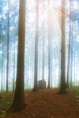 Garden Poster Forest Autumn scenery in a forest, with the sun rays through the mist a