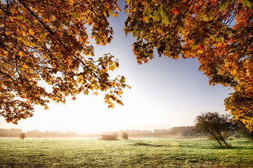 View though autumn leaves to sunrise