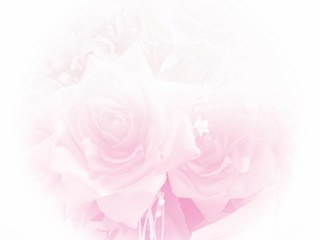Pink roses pastel background with copy space