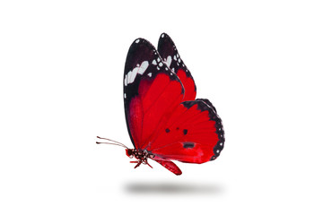 beautiful butterfly, isolated on white background, butterfly flying on white, colorful butterfly