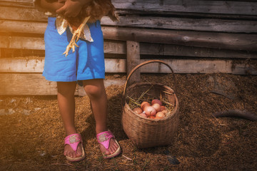 child feeling on take care chickens at hen house in countryside morning