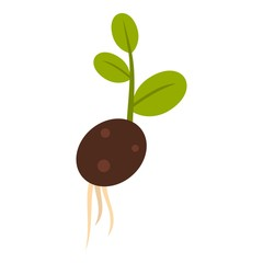 Sprout potatoes icon. Flat illustration of sprout potatoes vector icon for web