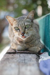 Cat  look and smile in the morning.