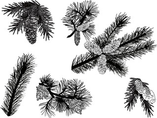 black pine branches sketches isolated on white