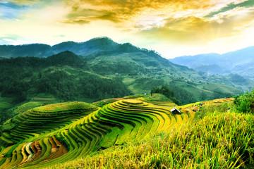 Fotobehang Rijstvelden Rice fields on terraced of Mu Cang Chai, YenBai, Vietnam. Rice fields prepare the harvest at Northwest Vietnam.Vietnam landscapes.