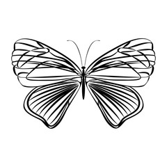 Vector sketch butterfly