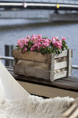 Potted plants outdoor on a terrace at the river