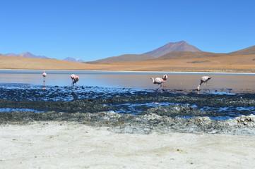 Potiosi - Bolivia