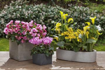 decorative arrangements of potted plants outdoor
