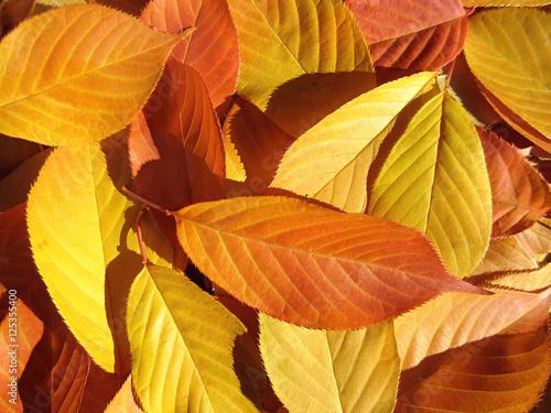 Bunte laub bl tter im herbst in gelb orange auf dem boden for Boden herbst 2016