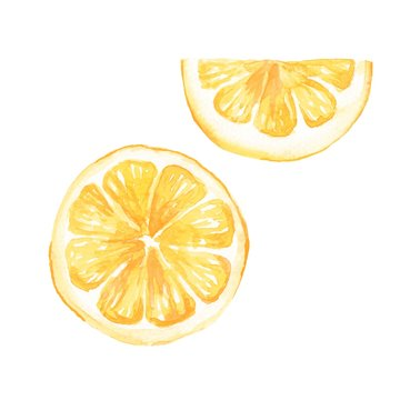 Watercolor lemon slice. Hand drawn illustration, isolated on white